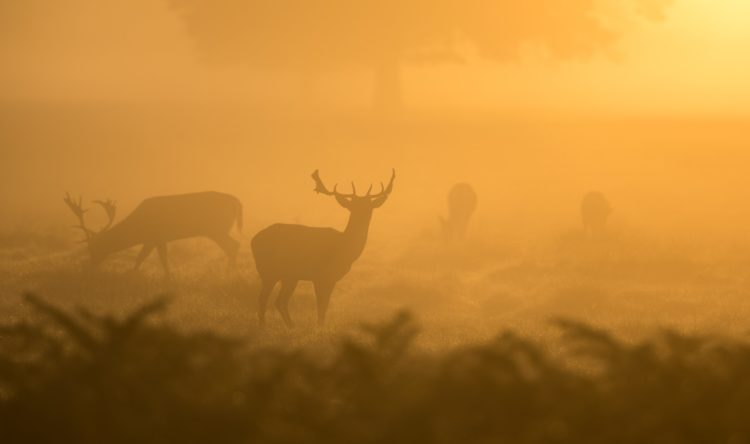https://www.intelligentinstructor.co.uk/wp-content/uploads/2018/11/deer.jpg