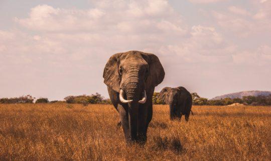 https://www.intelligentinstructor.co.uk/wp-content/uploads/2019/03/elephants.jpg